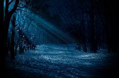 forêt-de-nuit-58906492